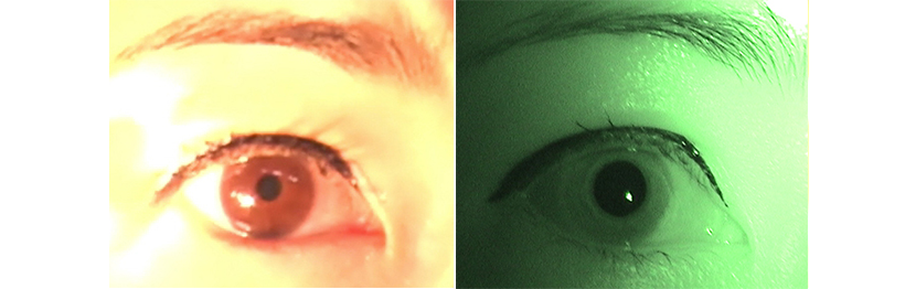 색과 명암을 인지하는 우리 눈의 정교한 구조와 기능! '본다'라는 기능을 위한 최적의 구조